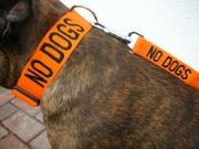dog collar staffordshire bull terrier boxer bulldog mastiff rottweiler