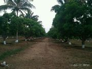 Farm land for sale at affordable price in Dharwad